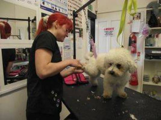 Dog Groomer training in Caerphilly