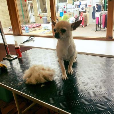 Dog Groomer in Keighley