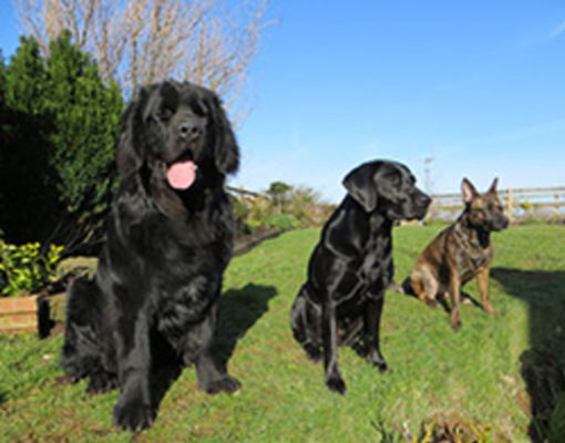 Dog Friendly Holidays in Carmarthenshire