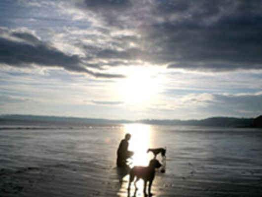 Dog Friendly Cottages in Laugharne