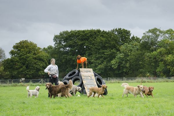 Dog Day care in Putney Heath