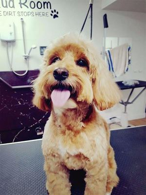 Dog Groomer in Heswall