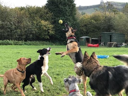 Dog Trainer in Devon