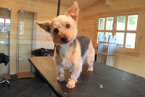Dog Groomer in Pinner