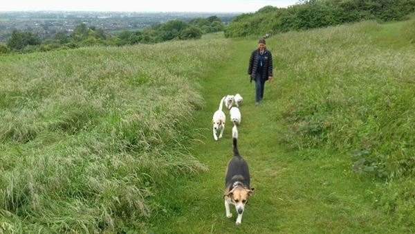 Dog Walking in West Sussex