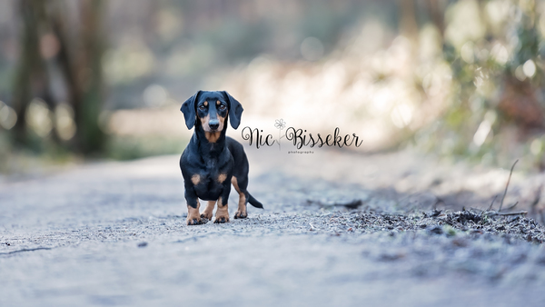 Proffessional Pet Photography in Surrey