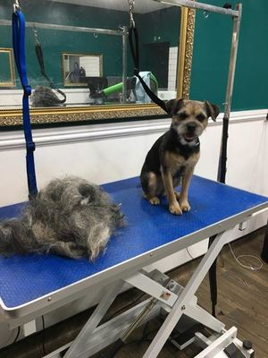 Dog Groomer in Marple
