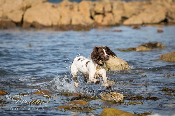 Doggy Cottages In Weymouth Dorset Accommodation Self