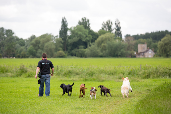 Dog Home Stay in Stafford