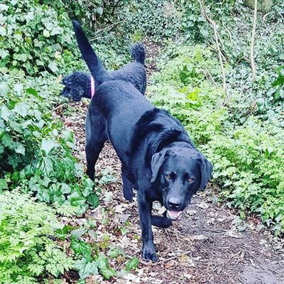 Dog Walker in Fulham