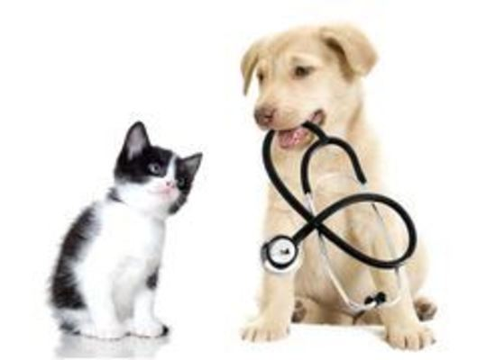 Animal First Aid Courses