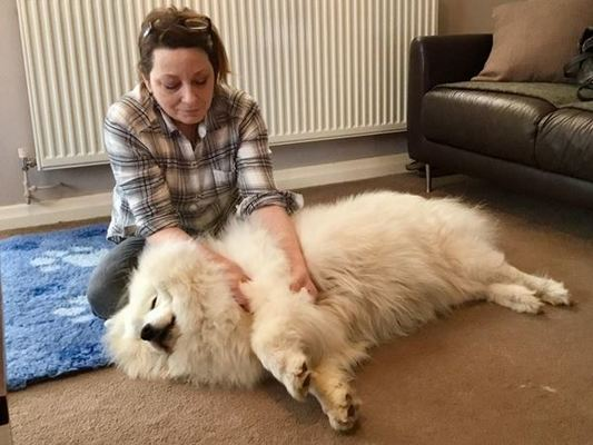 Canine massage in London