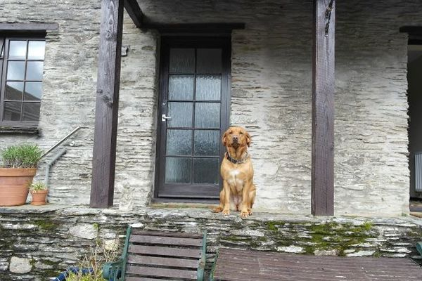 Dog Friendly Cottages in Ilfracombe