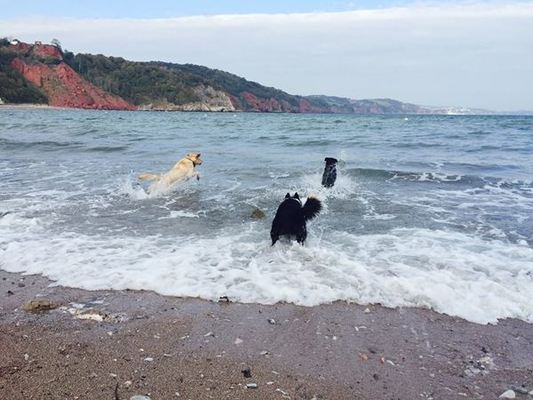 Dog Friendly Holidays in Devon