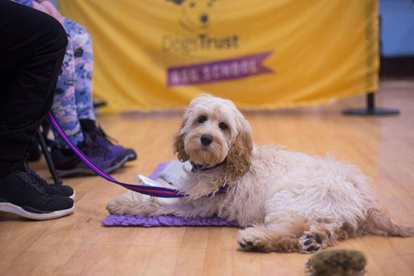 Dog School Hampshire (Dogs Trust)
