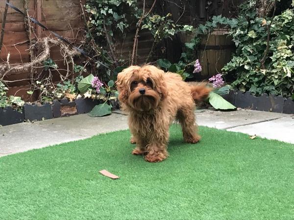 Top Dog Turf - Artificial Grass Designed For Dogs