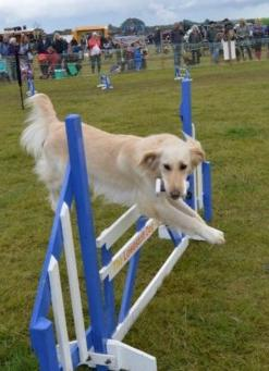 Lowestoft Dog Agility Display Team