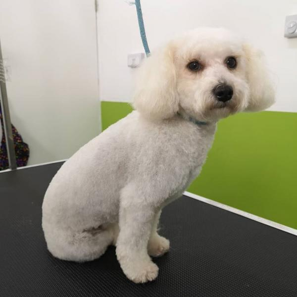 Dapper Dogs Grooming Salon & Pet Supplies