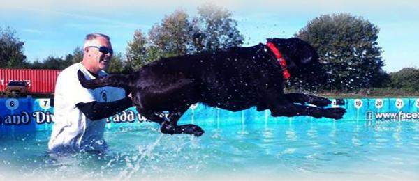 Canine Dip and Dive
