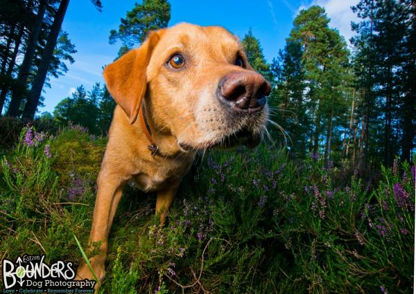 Bounders Dog Photography