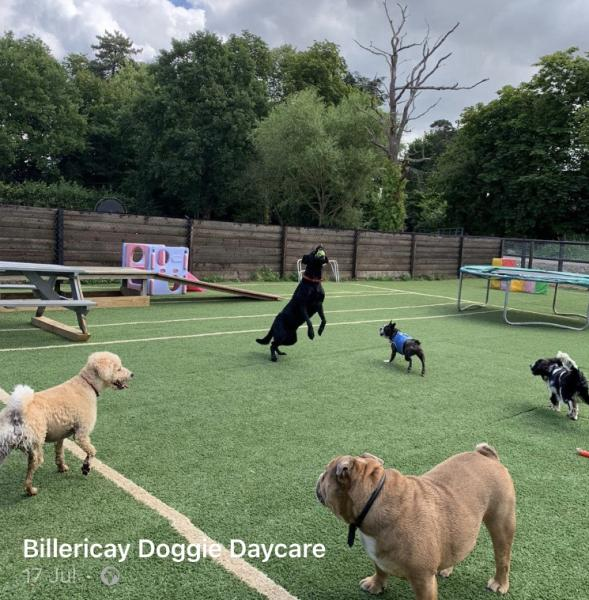 Billericay Doggie Daycare